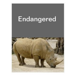 Rhinos Endangered Postcard