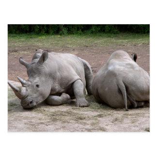 Rhinos Postales