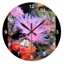 Rhizotrochus typus large clock