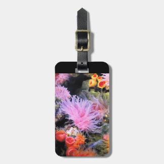 Rhizotrochus typus travel bag tags