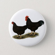 Rhode Island Red Bantams Pinback Button