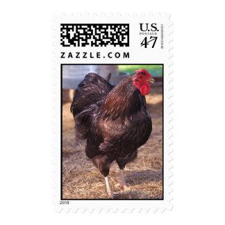 Rhode Island Red Chicken Postage