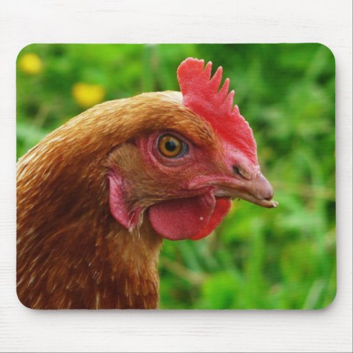 Rhode Island Red Hen Mouse Pad