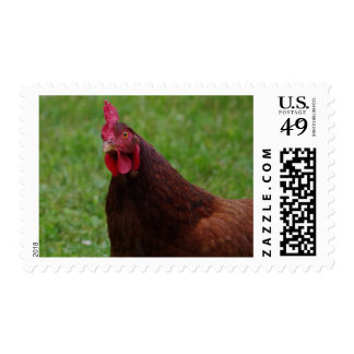 Rhode Island Red Postage Stamp