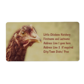 Rhode Island Red Pullet - Chicken Picture Labels