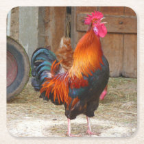 Rhode Island Red Rooster Crowing in Barnyard Square Paper Coaster