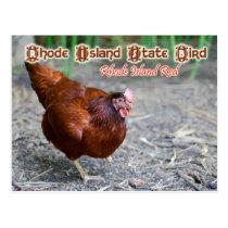 Rhode Island State Bird: Rhode Island Red Postcard