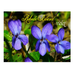 Rhode Island State Flower: Violet Postcard