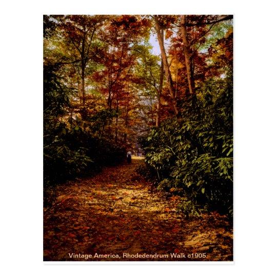 Rhodedendrum Walk Postcard