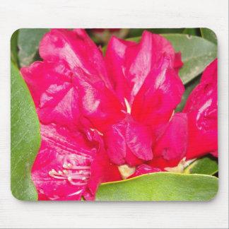 Rhodendron rojo florece la abertura tapete de raton