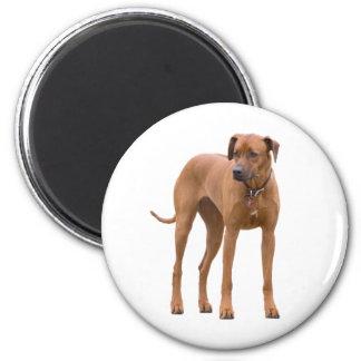 Rhodesian Ridgeback dog beautiful photo, gift 2 Inch Round Magnet
