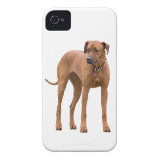 Rhodesian Ridgeback dog beautiful photo gift iPhone 4 Cases