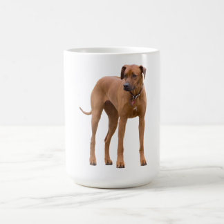 Rhodesian Ridgeback dog beautiful photo, gift Coffee Mug