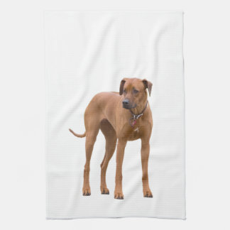 Rhodesian Ridgeback dog beautiful photo, gift Hand Towel