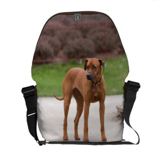Rhodesian Ridgeback dog beautiful photo, gift Messenger Bag
