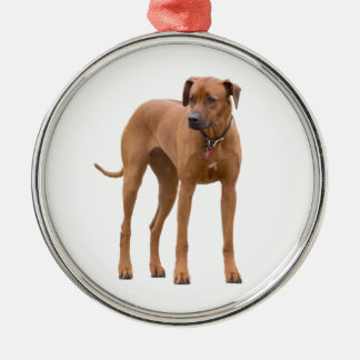 Rhodesian Ridgeback dog beautiful photo, gift Ornaments