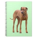 Rhodesian Ridgeback dog beautiful photo, gift Spiral Notebook
