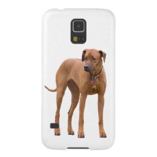 Rhodesian Ridgeback dog beautiful photo portrait Case For Galaxy S5