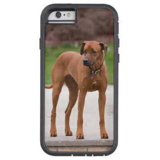 Rhodesian Ridgeback dog beautiful photo portrait Tough Xtreme iPhone 6 Case