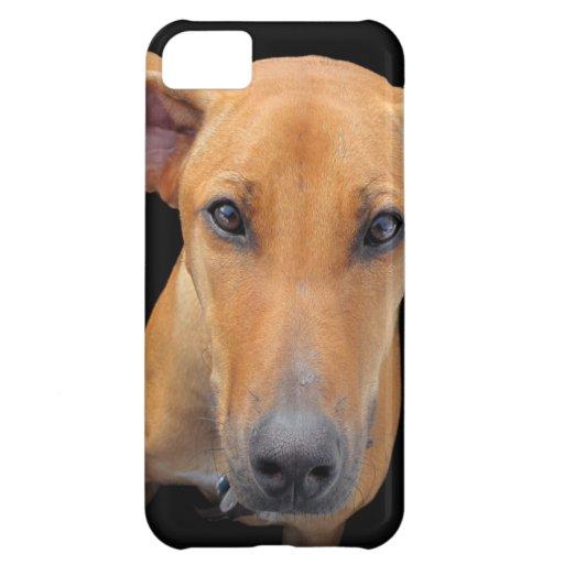 Rhodesian Ridgeback Dog Case For iPhone 5C