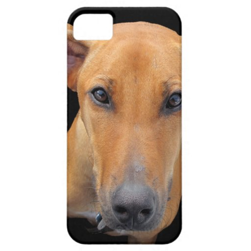 Rhodesian Ridgeback Dog iPhone 5 Cover