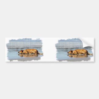 Rhodesian Ridgeback - Is the Water Cold? Bumper Sticker