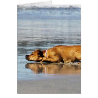 Rhodesian Ridgeback - Is the Water Cold? Greeting Card