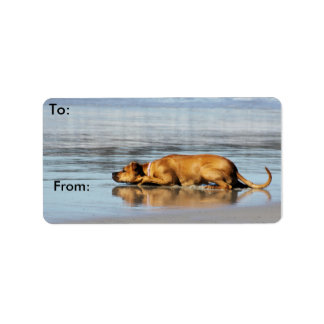 Rhodesian Ridgeback - Is the Water Cold? Label