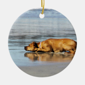 Rhodesian Ridgeback - Is the Water Cold? Ornament