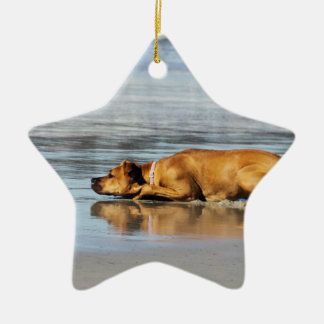 Rhodesian Ridgeback - Is the Water Cold? Christmas Ornaments