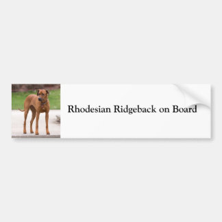 Rhodesian Ridgeback on board custom bumper sticker