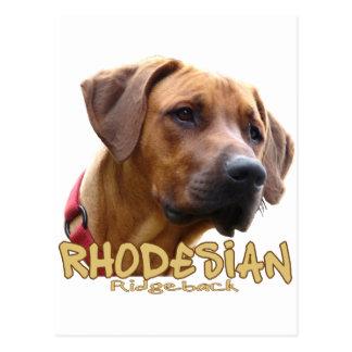 Rhodesian Ridgeback Postcard