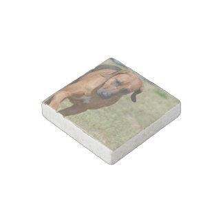 Rhodesian Ridgeback Prancing Stone Magnet