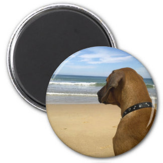 Rhodesian Ridgeback Products 2 Inch Round Magnet