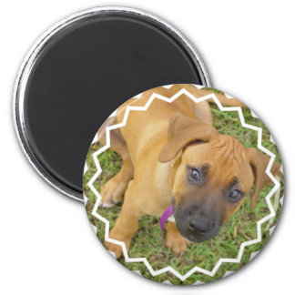 Rhodesian Ridgeback Puppies Magnet Fridge Magnet