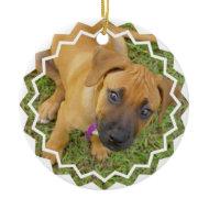 Rhodesian Ridgeback Puppy Ornament ornament