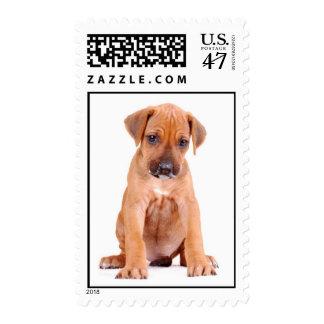 Rhodesian Ridgeback puppy U.S. stamp