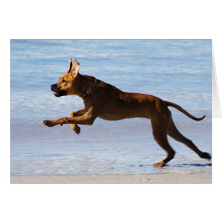 Rhodesian Ridgeback - salto Tarjeta De Felicitación