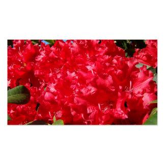 Rhodies rojo florece las tarjetas de visita floral