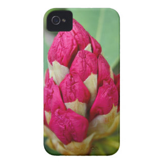 Rhododendron BlackBerry Bold Case-Mate iPhone 4 Case