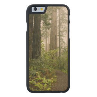 Rhododendron blooming among the Coast Redwoods / Carved® Maple iPhone 6 Case