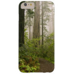 Rhododendron blooming among the Coast Redwoods / Barely There iPhone 6 Plus Case
