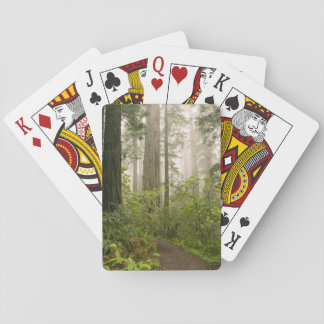 Rhododendron blooming among the Coast Redwoods / Deck Of Cards
