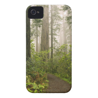 Rhododendron blooming among the Coast Redwoods / iPhone 4 Cover