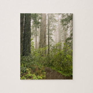 Rhododendron blooming among the Coast Redwoods / Jigsaw Puzzle