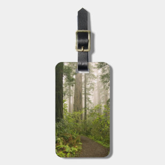 Rhododendron blooming among the Coast Redwoods / Luggage Tag