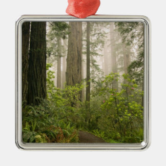 Rhododendron blooming among the Coast Redwoods / Metal Ornament