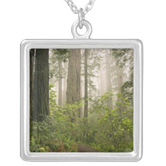 Rhododendron blooming among the Coast Redwoods Necklace