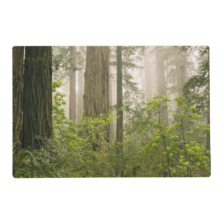 Rhododendron blooming among the Coast Redwoods / Laminated Placemat