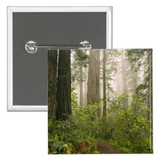 Rhododendron blooming among the Coast Redwoods / Pinback Button